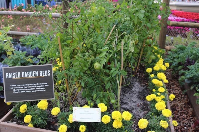 epcot-international-flower-and-garden-festival-raised-beds