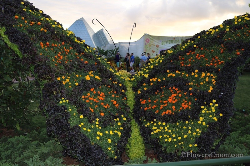 epcot-international-flower-and-garden-festival-butterfly