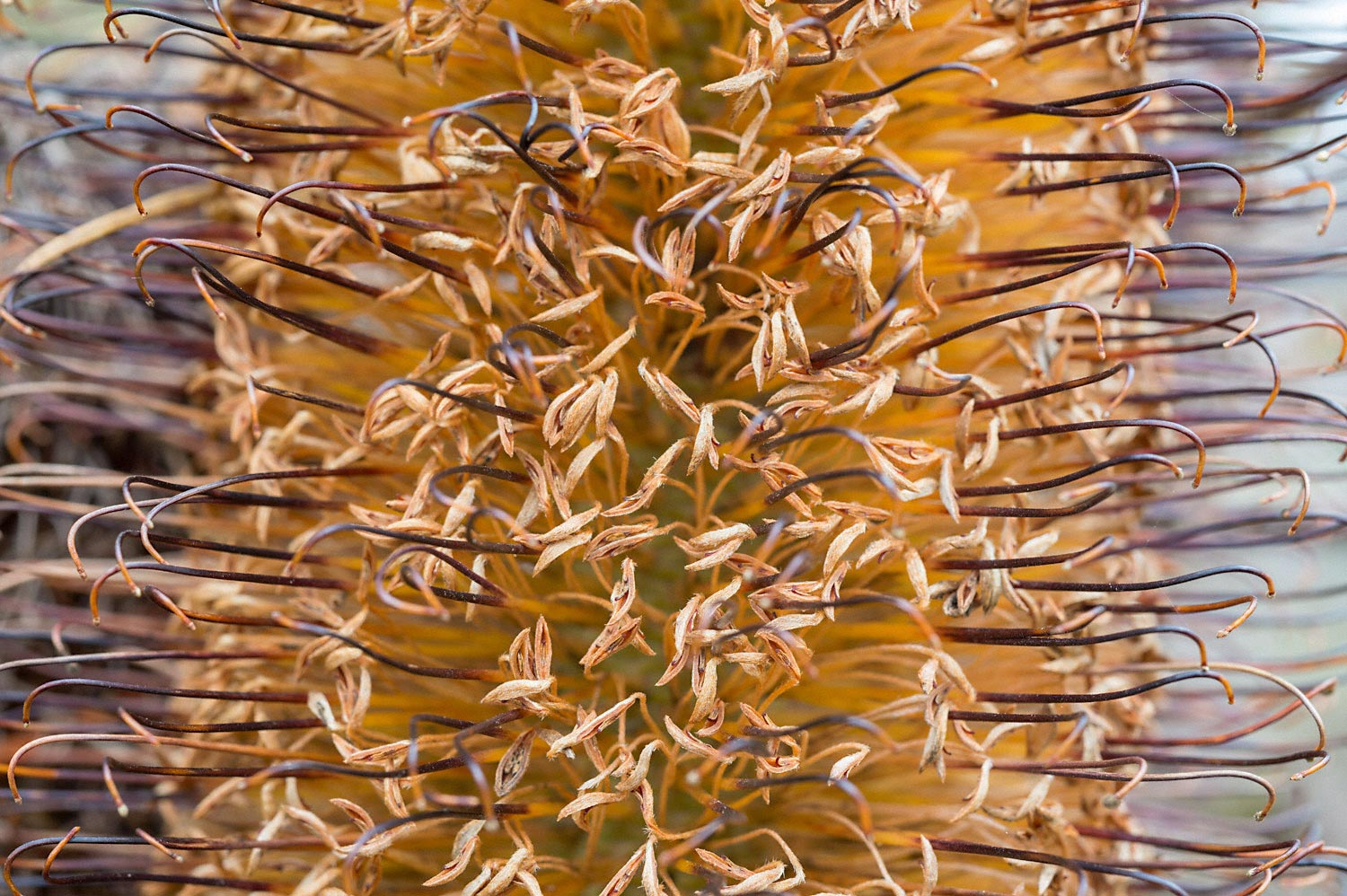 Warren-Hinder-Banksia-Detail-Breaside-Blackheath-tn.jpg