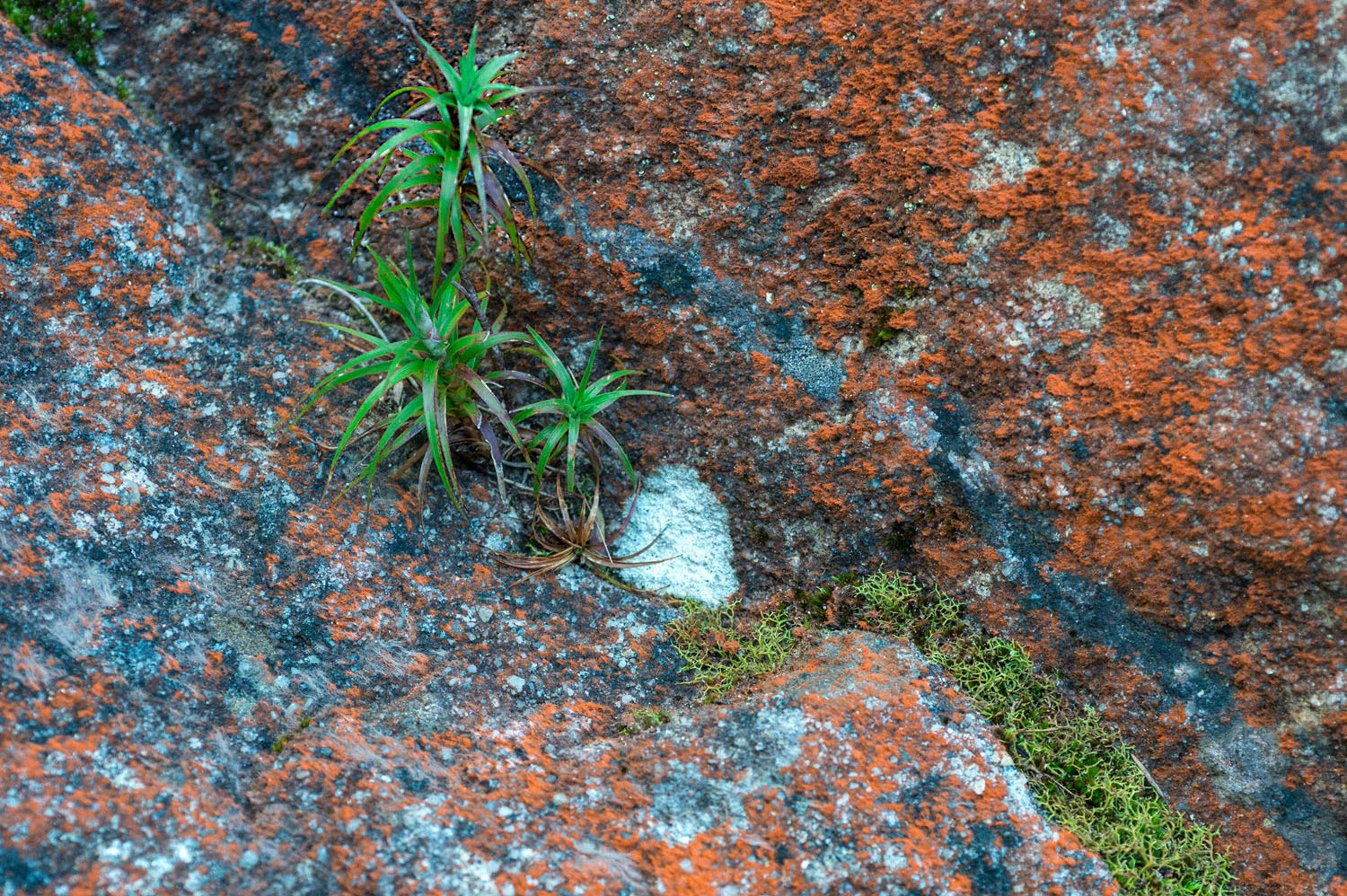 Warren-Hinder-Plant-Rock-Moss-Minni-Ha-Ha.jpg