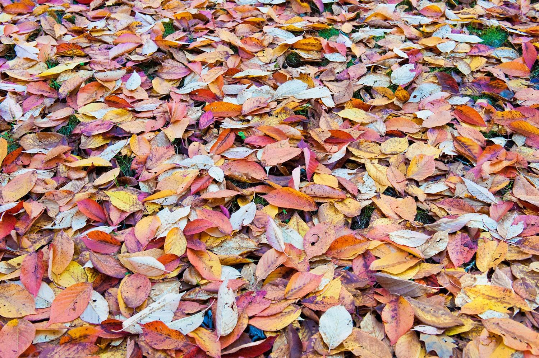 Warren-Hinder-Autumn-Carpet.jpg