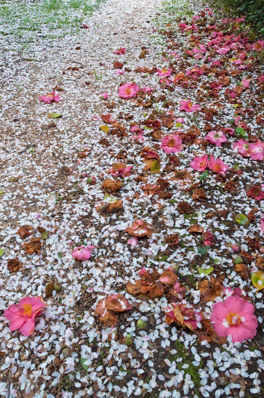 Warren-Hinder-Blossom-Pathway-Leura.jpg