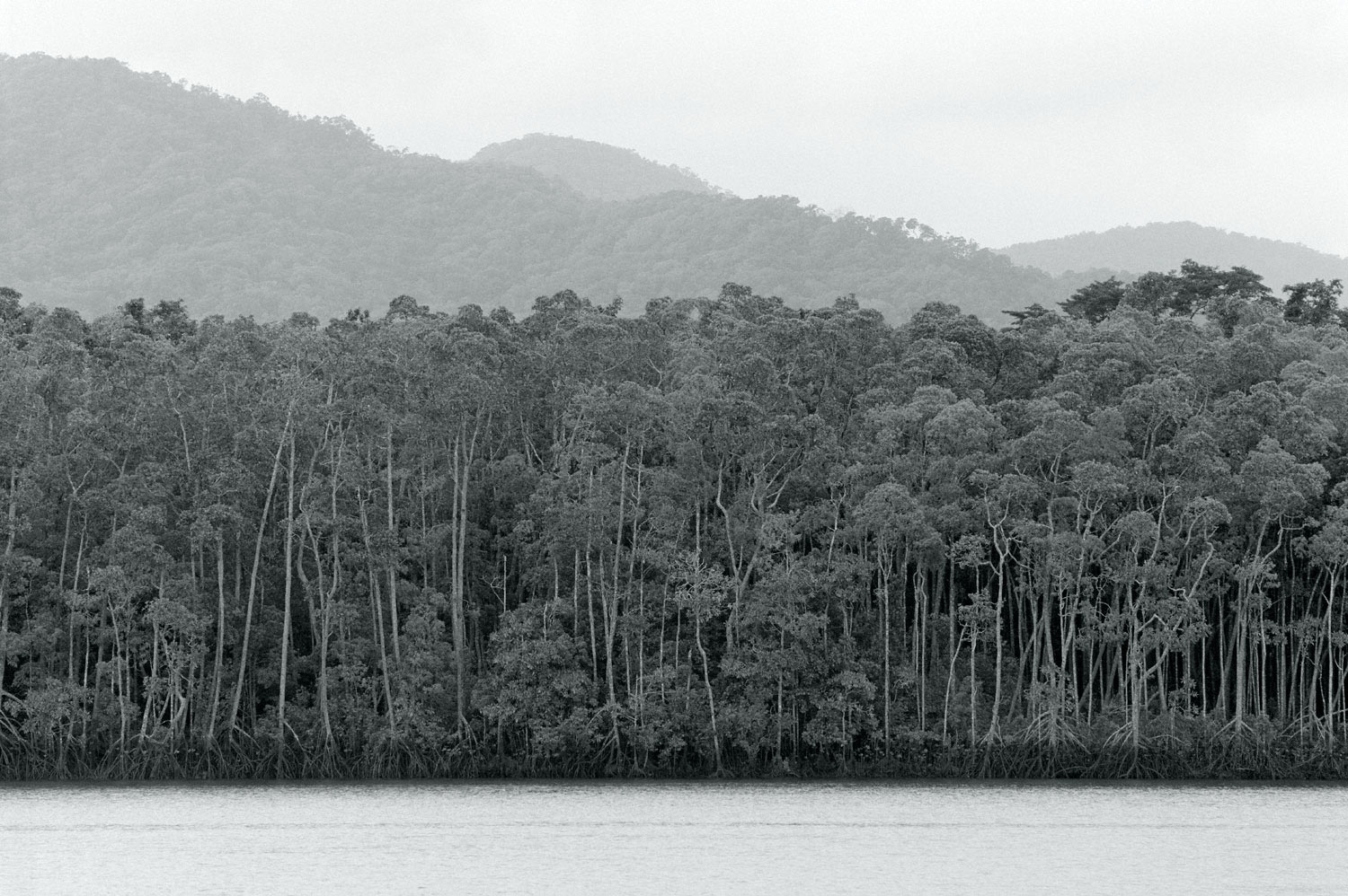 Warren-Hinder-Daintree-North-QLD.jpg