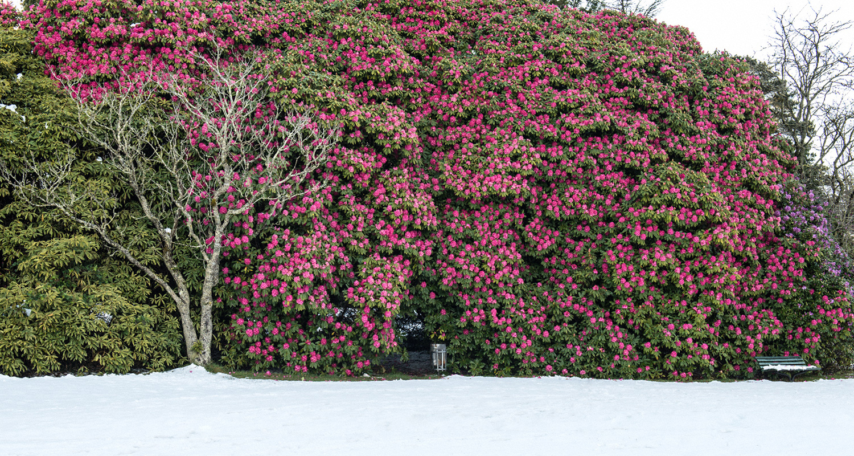 Warren-Hinder-Rhododendron-Park-Snow-in-October-Blackheath.jpg