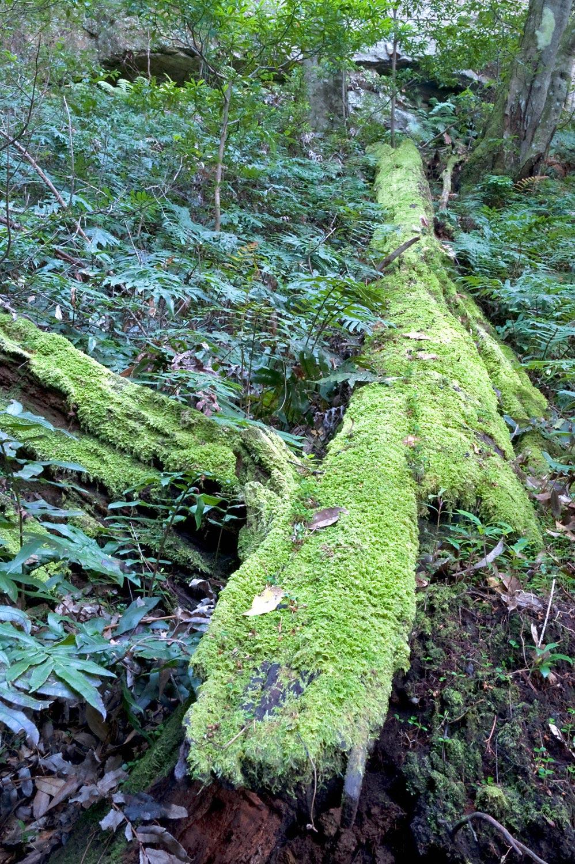 Warren-Hinder-LR-Fallen-Tree-with-Moss.jpg
