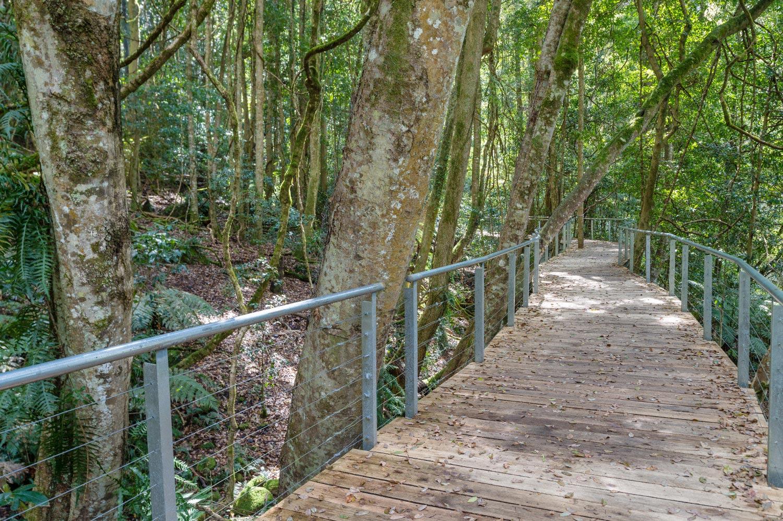 Warren-Hinder-LR-Rainforest-Boardwalk-Scenic-Railway.jpg