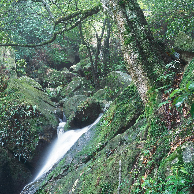 Warren-Hinder-LR-Valley-Stream-Katoomba-Falls-.jpg