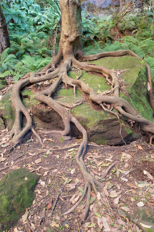 Warren-Hinder-LR-Tree-Strangling-Rock-Federal-Pass.jpg