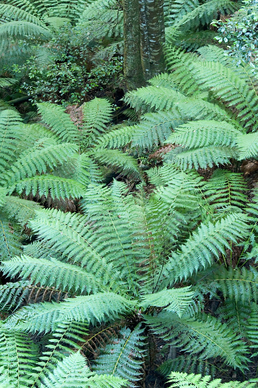 Warren-Hinder-LR-Federal-Pass-Fern-Forest.jpg