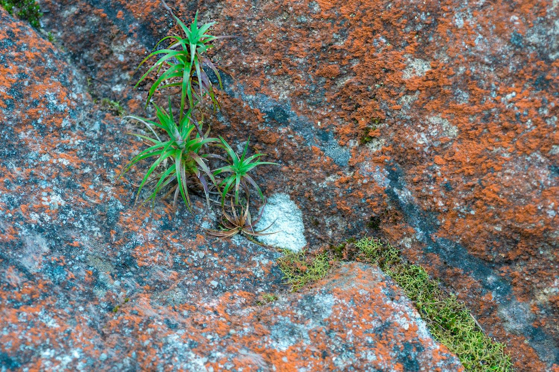 Warren-Hinder-LR-Plant-Rock-Moss-Minni-Ha-Ha.jpg