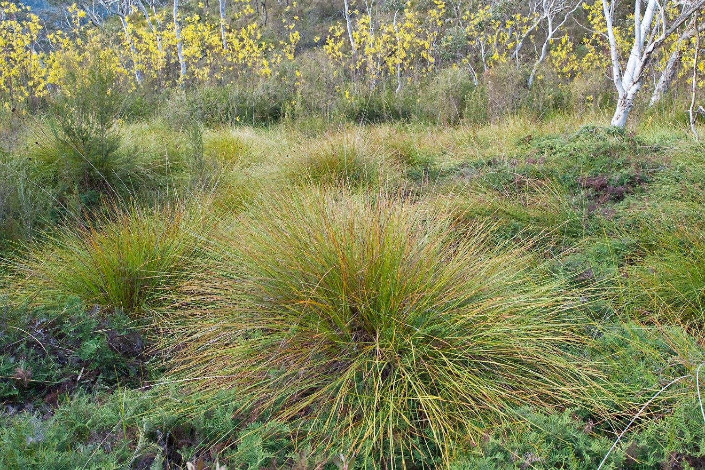 Warren-Hinder-LR-Grasses-Minni-Ha-Ha.jpg