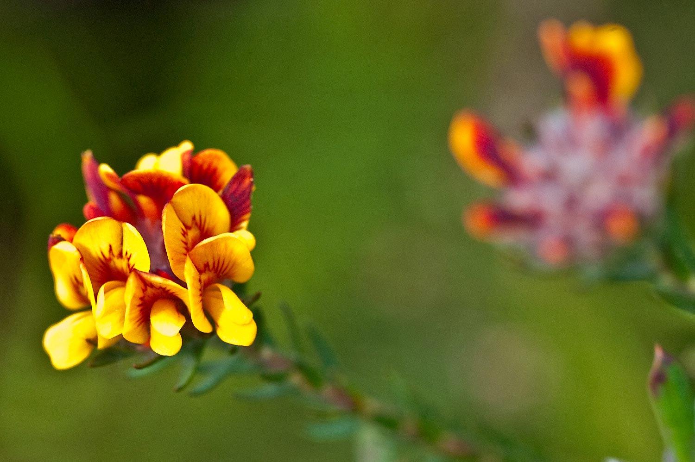 Warren-Hinder-LR-Yellow-Flowers-Minni-Ha-Ha.jpg