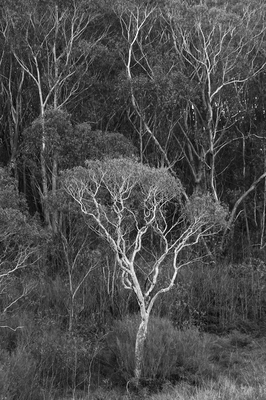 Warren-Hinder-LR-Gum-trees-Minni-Ha-Ha.jpg