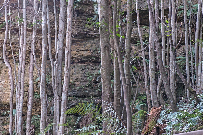 Warren-Hinder-Gordon-Falls-Path-Forest-detail.jpg