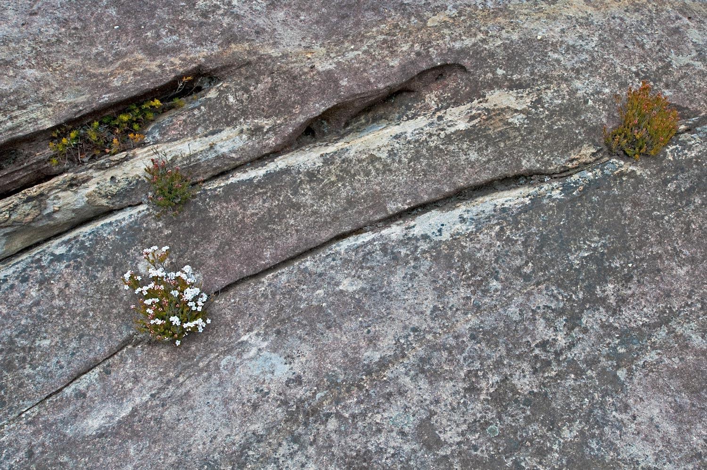 Warren-Hinder-LR-Rock-Garden.jpg