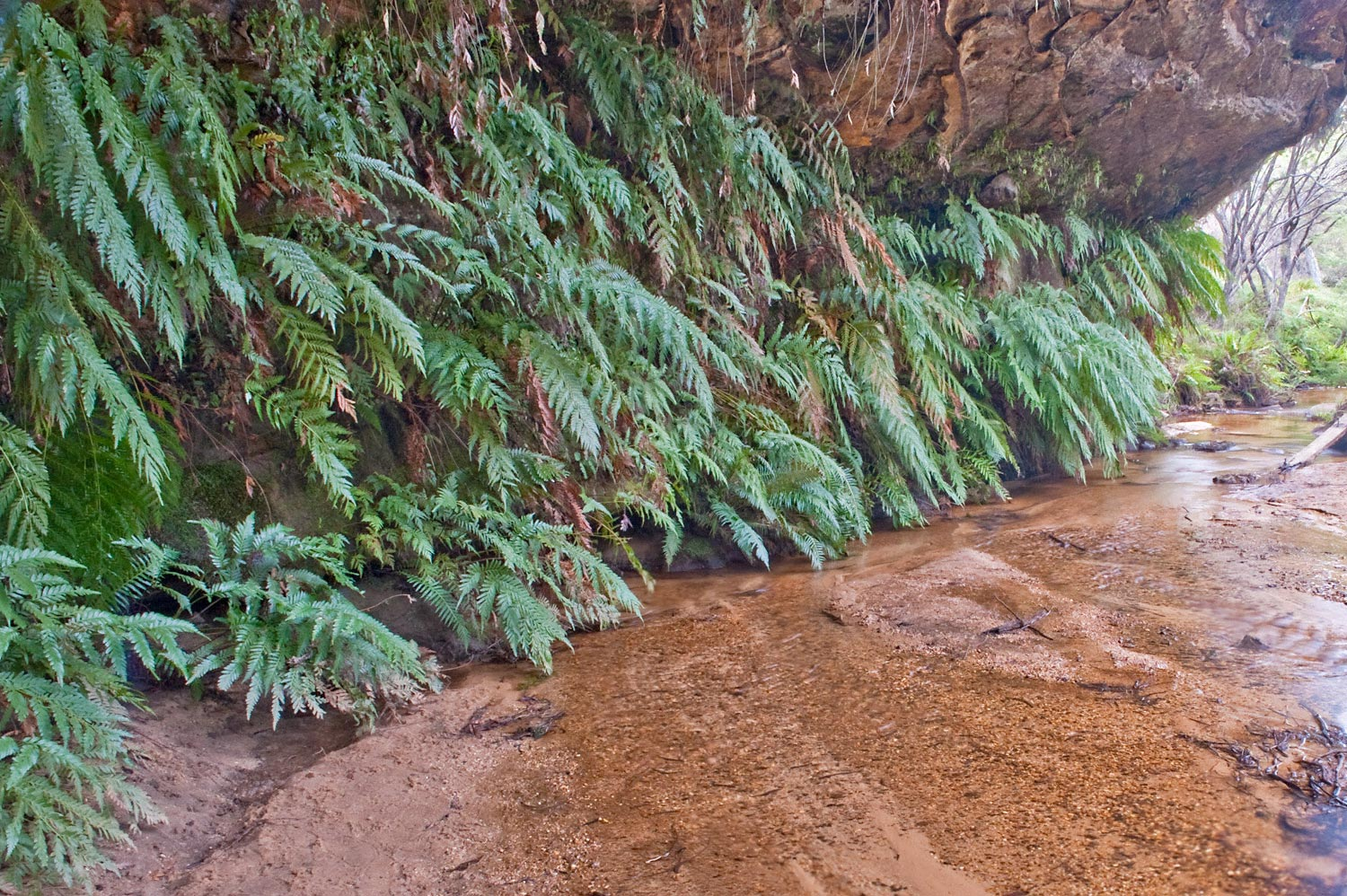Warren-Hinder-LR-Ferns-in-Water-Darwin.jpg