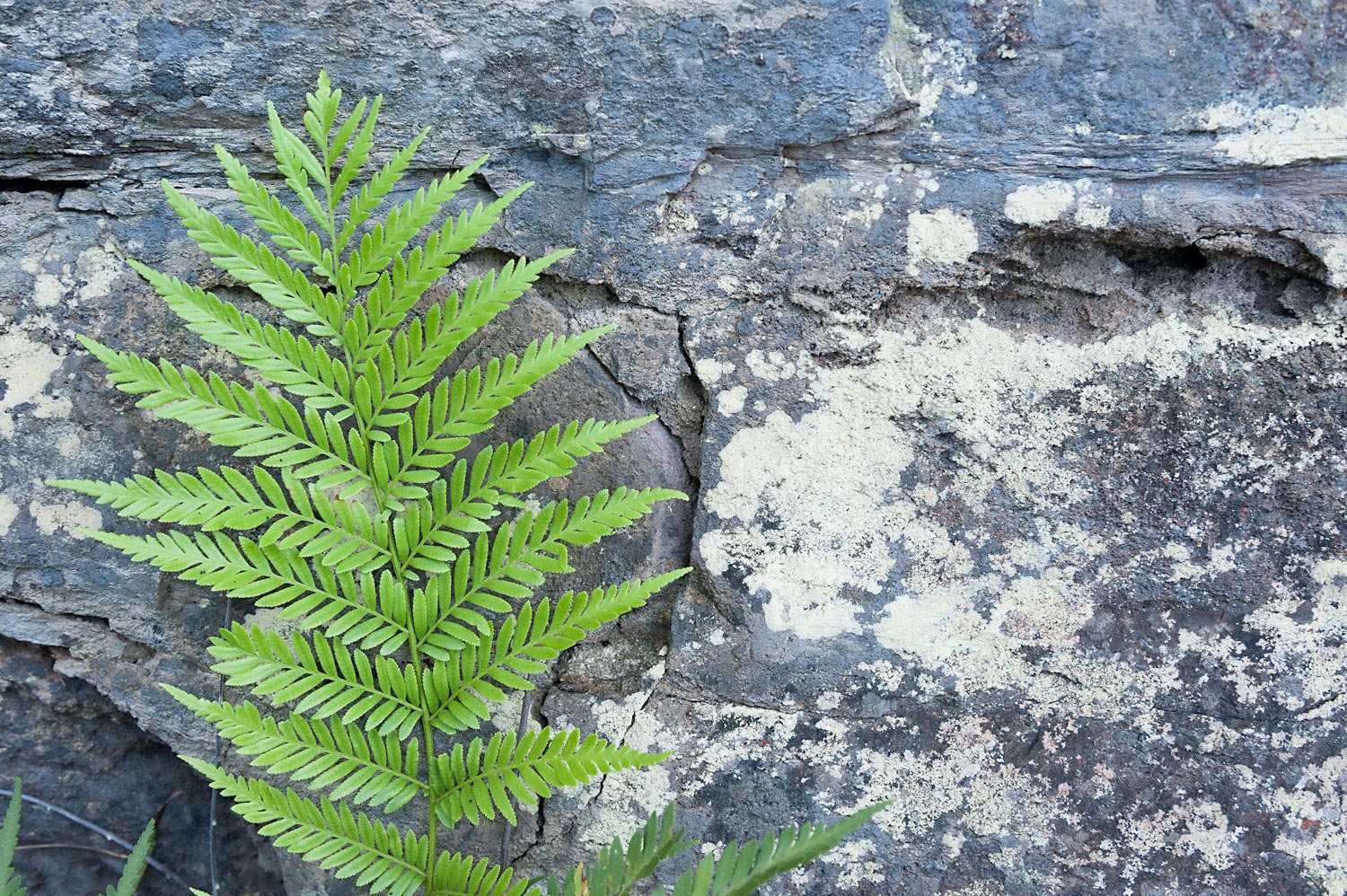 Warren-Hinder-LR-National-Pass-Fern-study-with-rock-shelf-sandstone.jpg