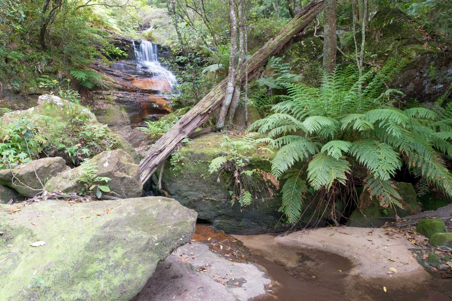 Warren-Hinder-LR-Waterfall-and-Fern-sudy-Wentworth-Pass.jpg