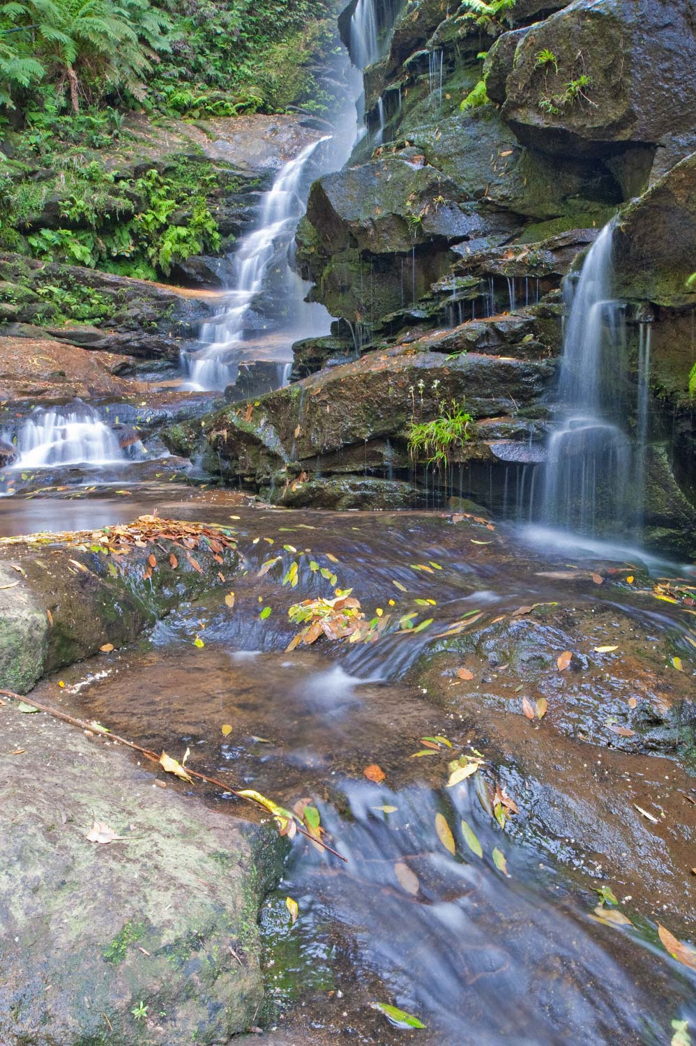 Warren-Hinder-LR-Valley-Waters-Sylvia-leaf-flow.jpg