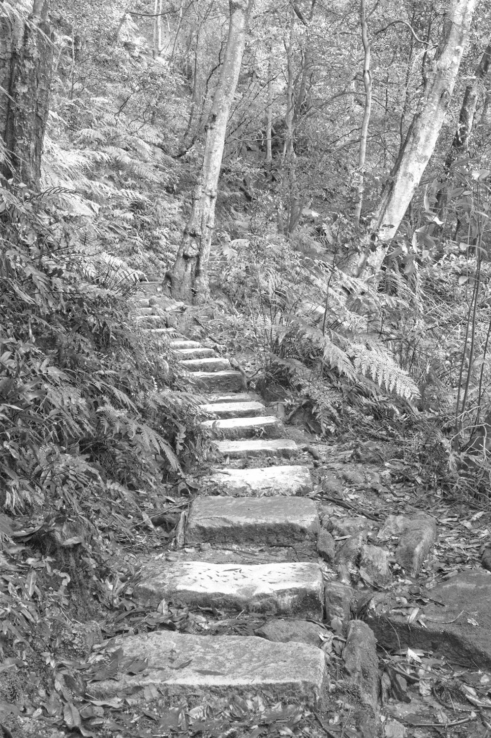 Warren-Hinder-LR-Sandstone-Path-National-Pass-Wentworth-Falls.jpg