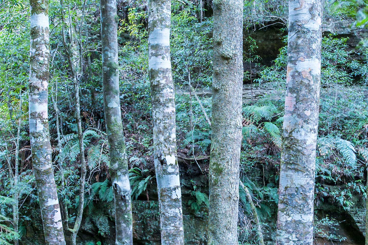 Warren-Hinder-LR-Rainforest-Trees-at-size-master.jpg