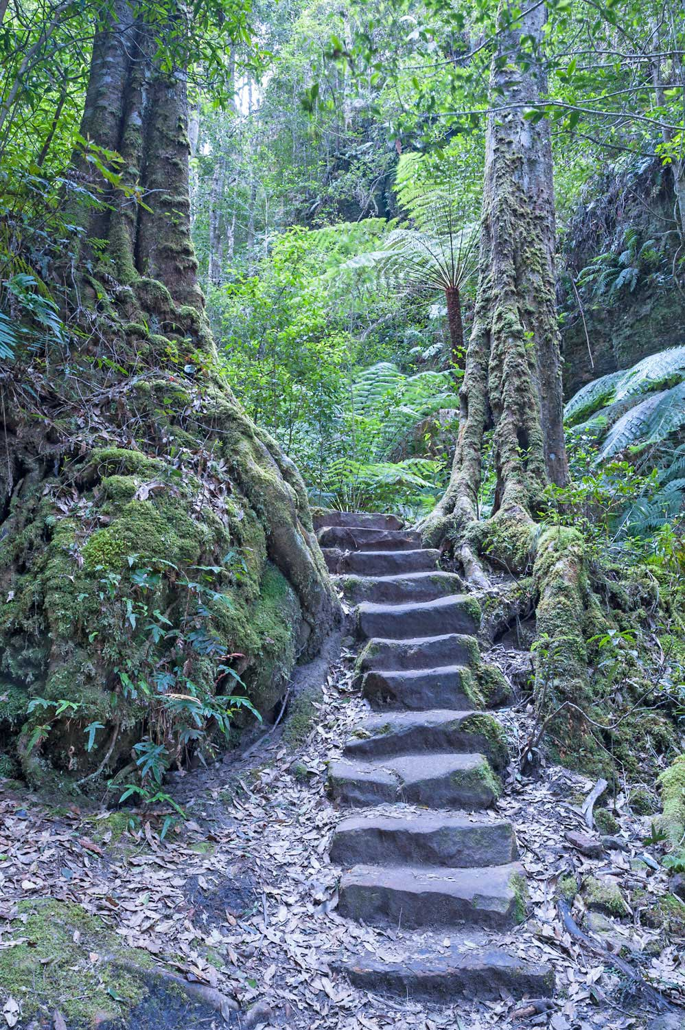 Warren-Hinder-LR-Stairs-in-Rainforest-Grand-Canyon.jpg