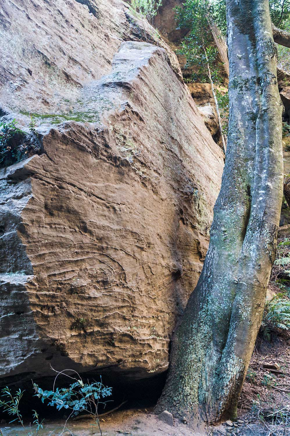 Warren-Hinder-LR-Tree-under-rock.jpg