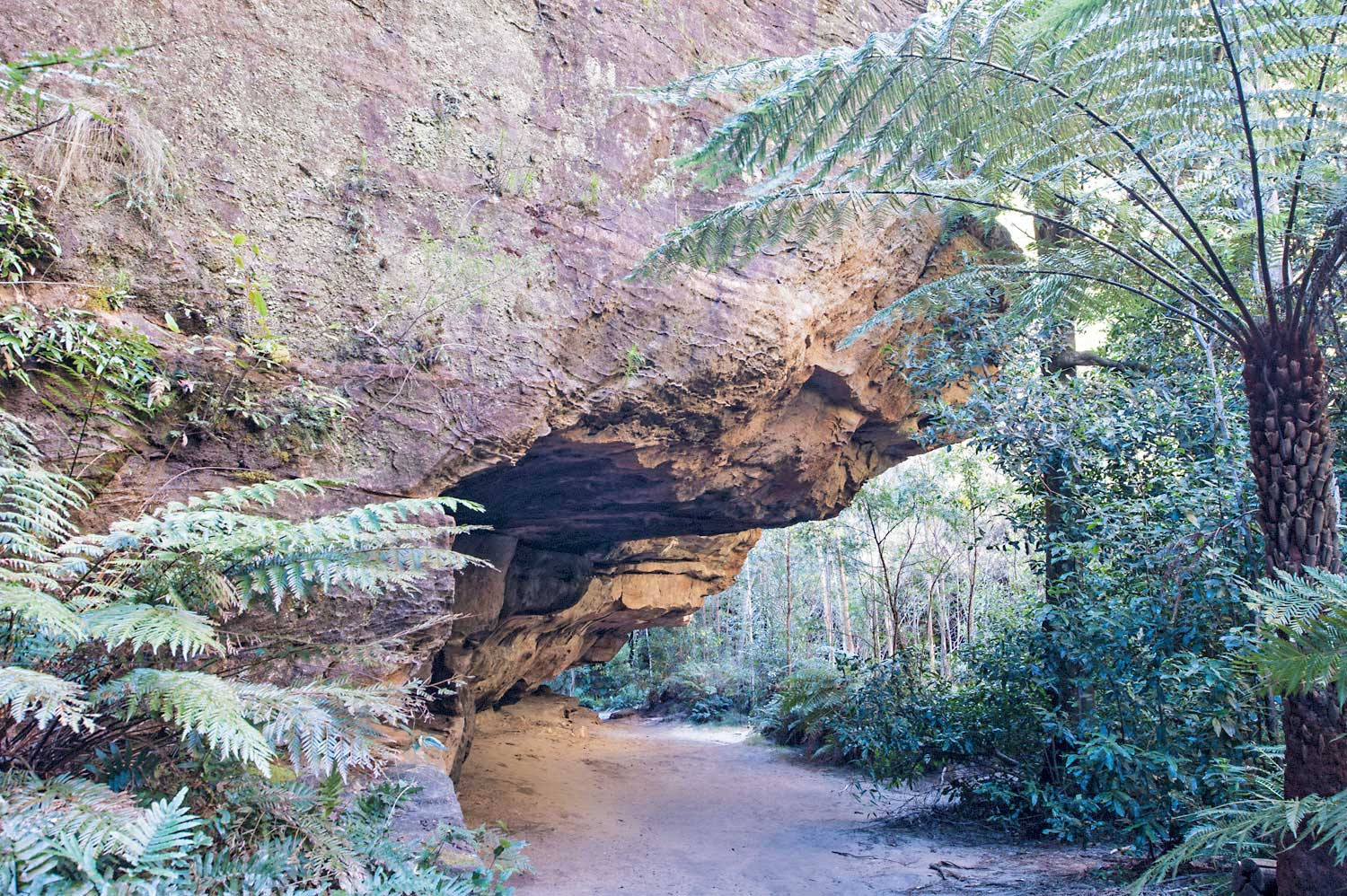 Warren-Hinder-LR-Cave-with-Fern.jpg