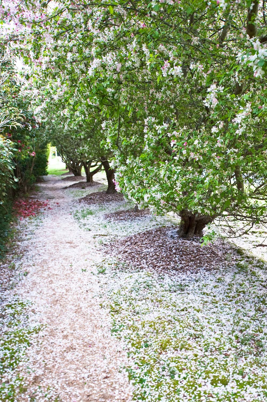 Warren-Hinder-LR-Apple-blossoms-on-street.jpg