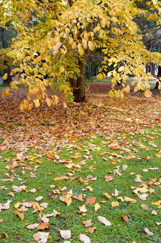 Warren-Hinder-LR-Leaf-colour-garden.jpg