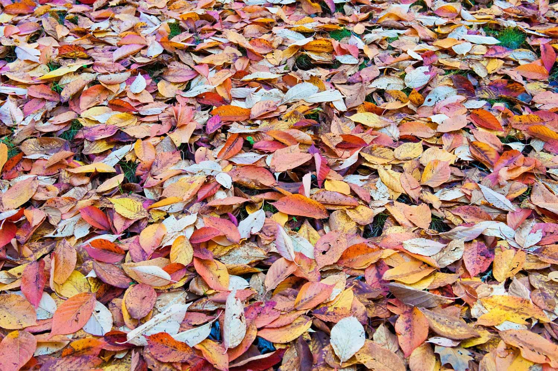 Warren-Hinder-LR-Autumn-Carpet.jpg