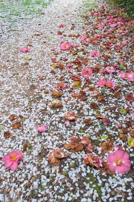 Warren-Hinder-LR-Blossom-Pathway-Leura.jpg