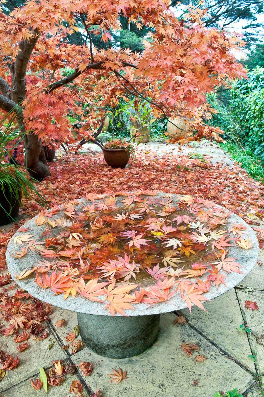 Warren-Hinder-LR-Autumn-garden-Leura.jpg