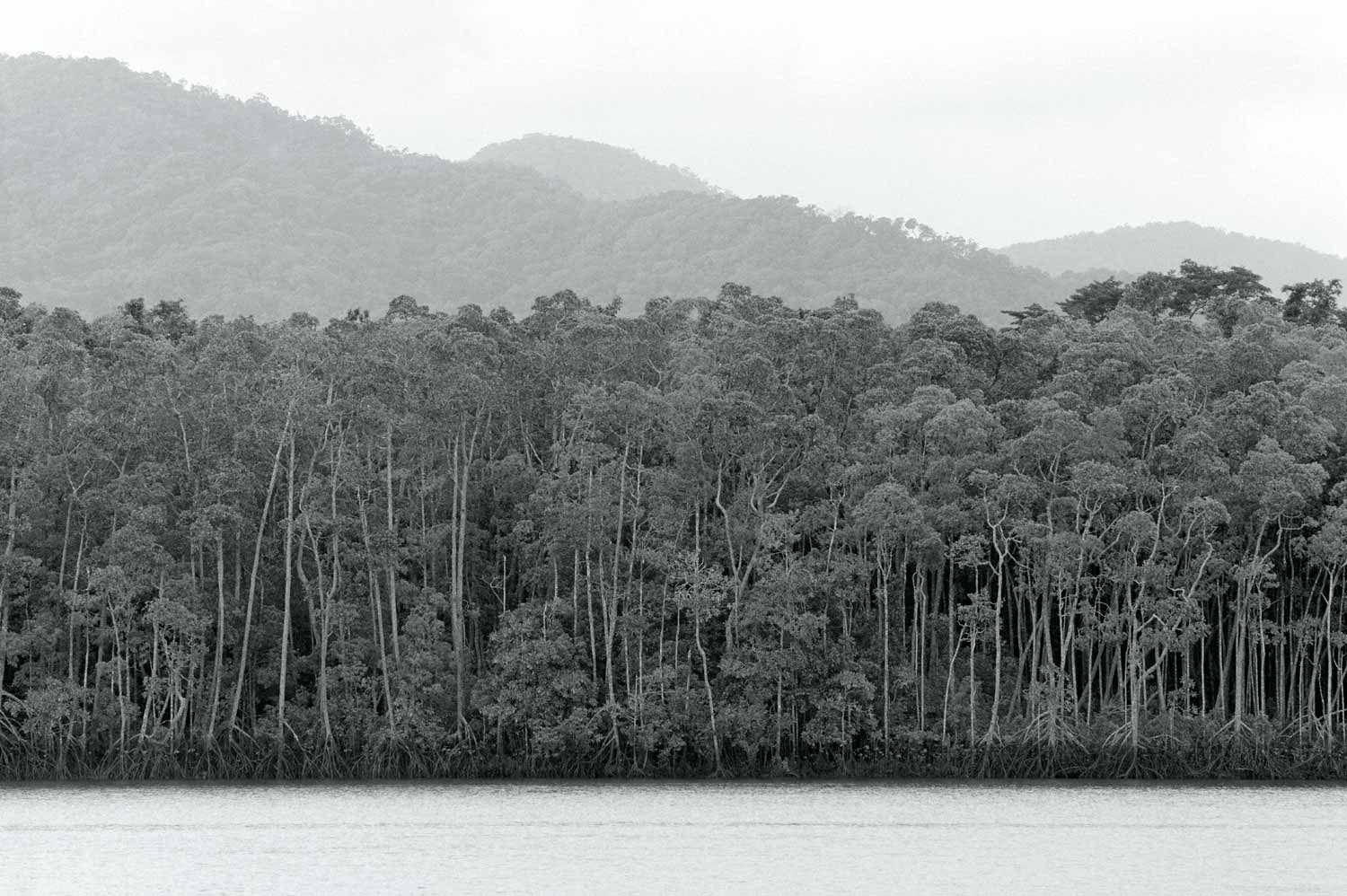 Warren-Hinder-LR-Daintree-North-QLD.jpg