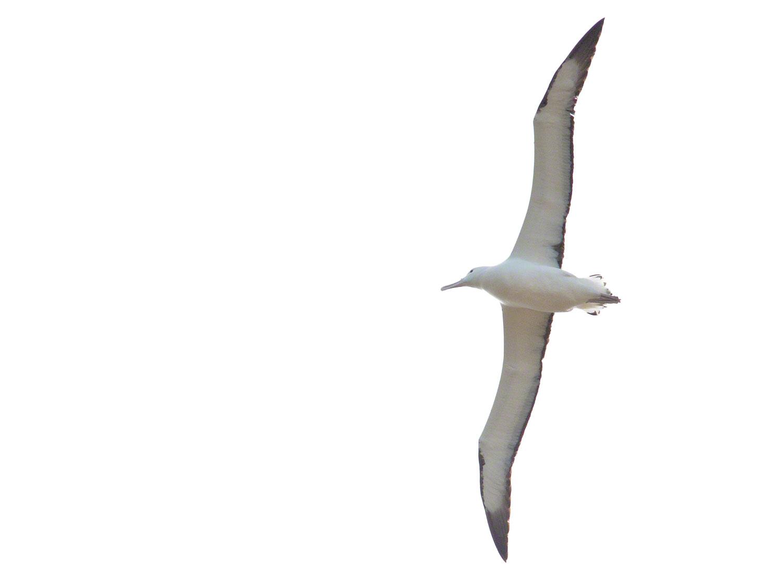 Warren-Hinder-LR-Albatross.jpg