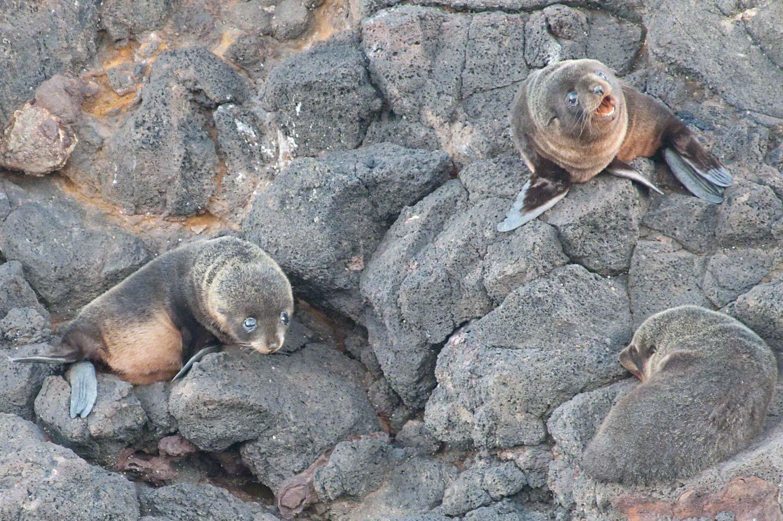 Warren-Hinder-LR-Baby-Seals.jpg