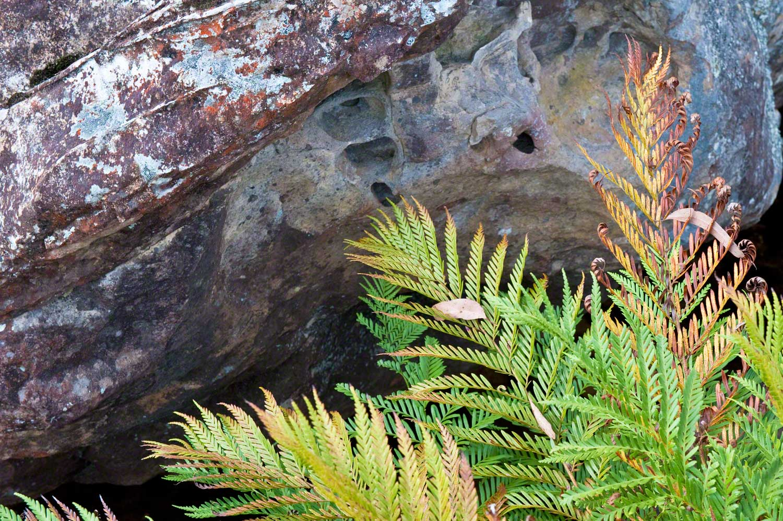 Warren-Hinder-LR-Ferns-and-Rocks-Braeside.jpg
