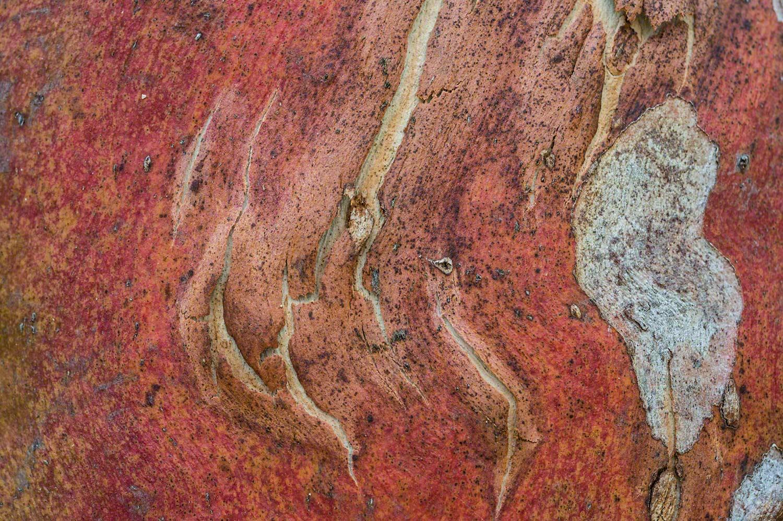 Warren-Hinder-Bark-detail-up-close_.jpg