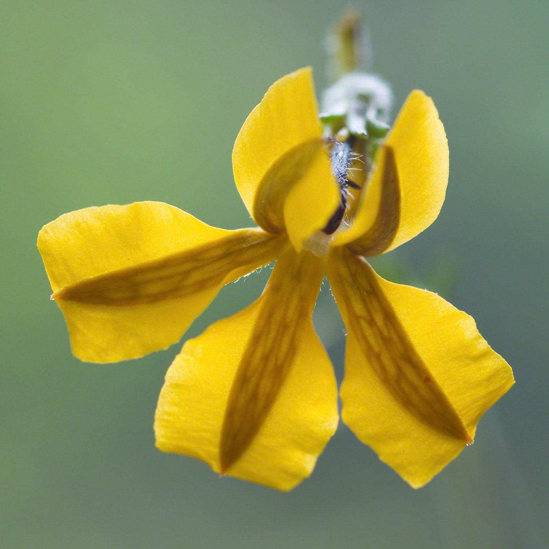 Warren-Hinder-Yellow-Flower.jpg