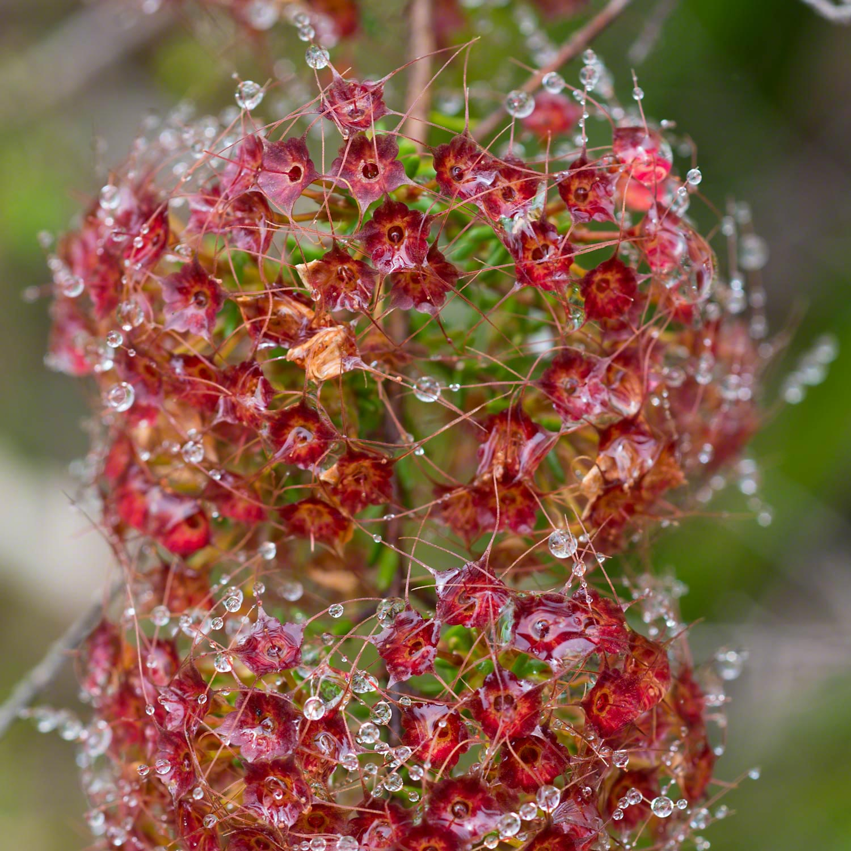 Warren-Hinder-Flower-Matrix.jpg