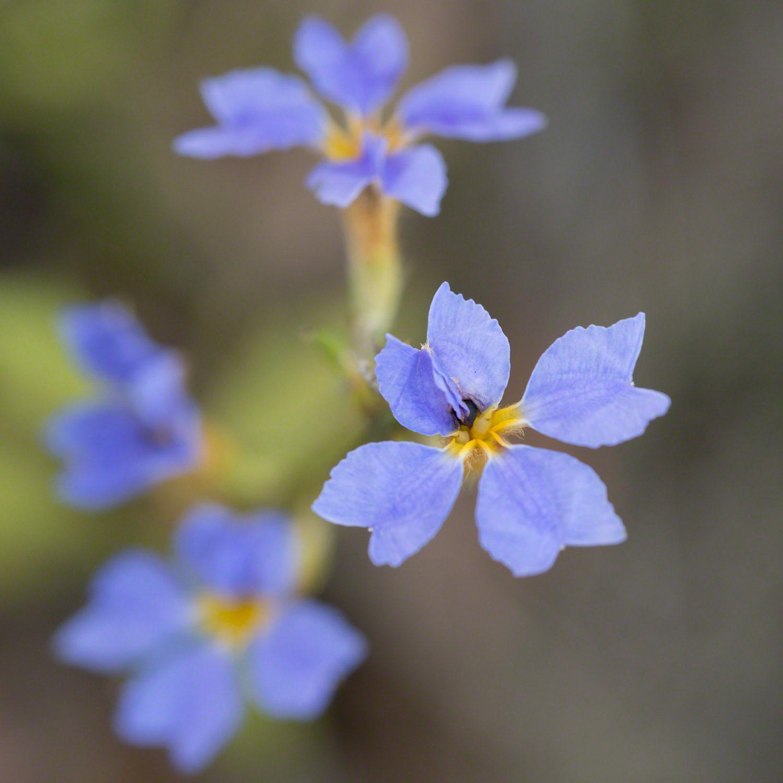 Warren-Hinder-blue-Flower-detail.jpg