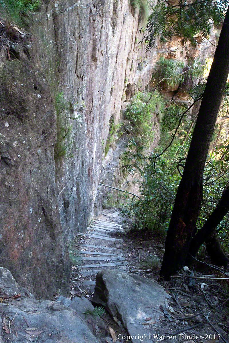 Perrys Lookdown Track to Bluegum