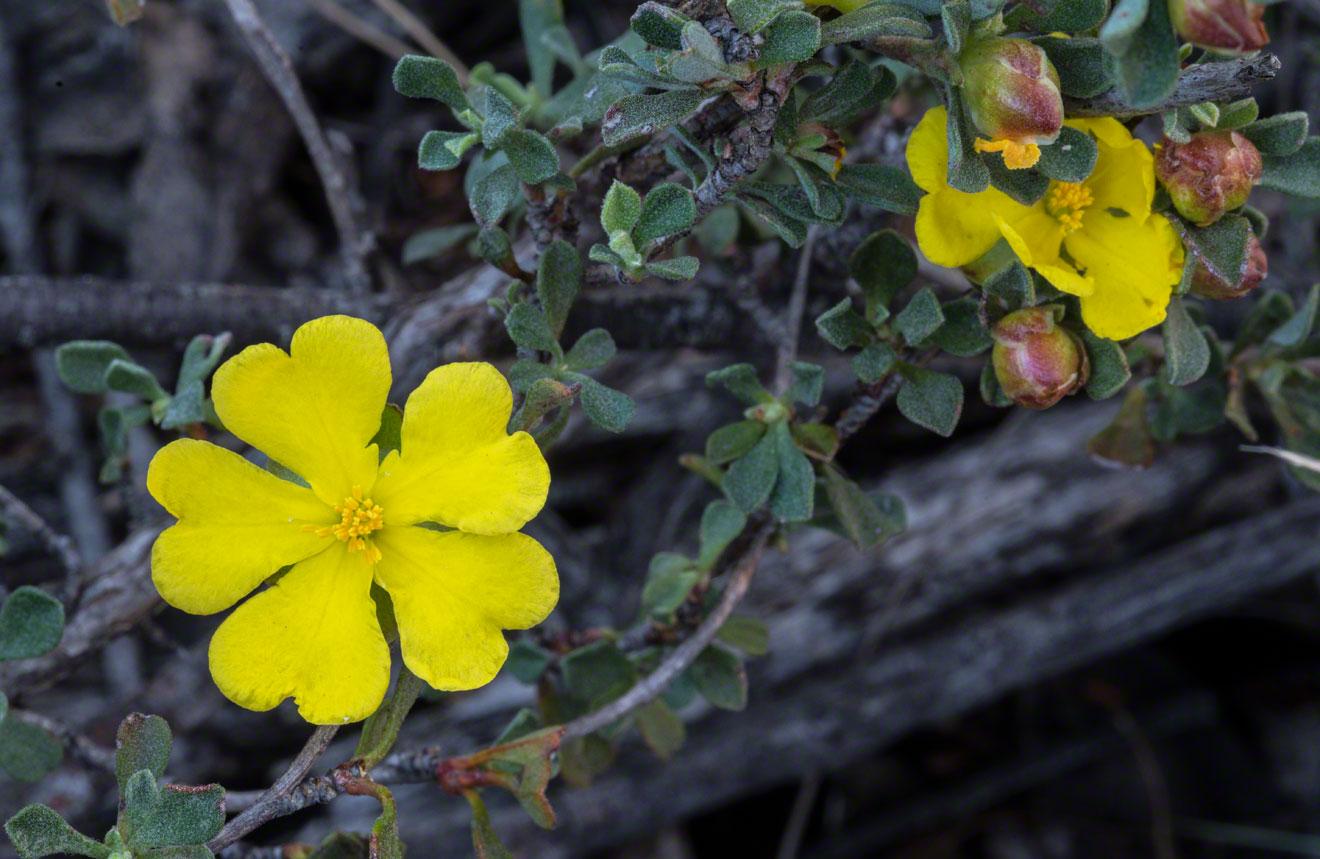 Yellow-flower-4-Warren-Hinder-2014.jpg