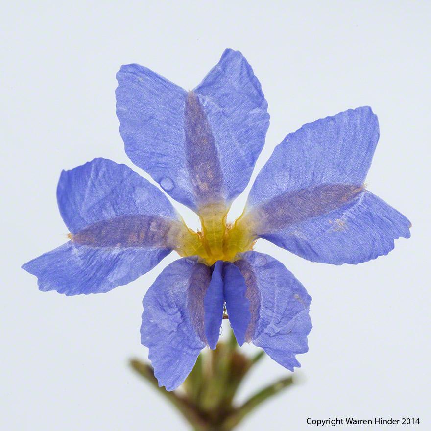 Purple-Flower-Warren-Hinder-Copyright-2014.jpg