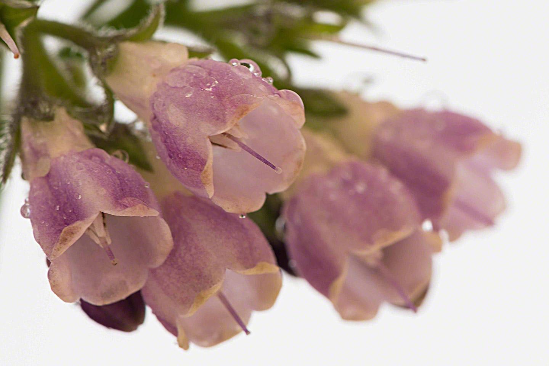 flower-4-lo-res.jpg