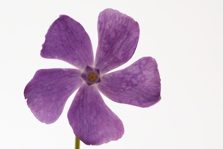 WILD-FLOWER-D850-lores.jpg