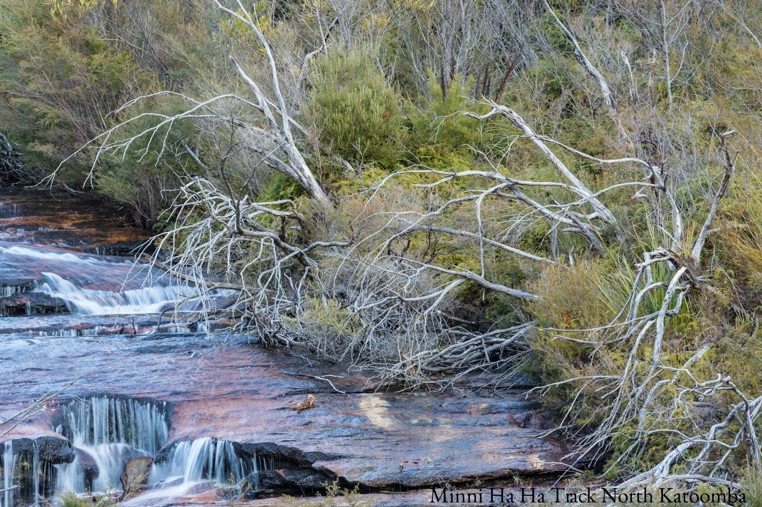 Warren-Hinder-LR-Upper-Minni-Ha-Ha-Dead-Trees-after-bush-fires.jpg