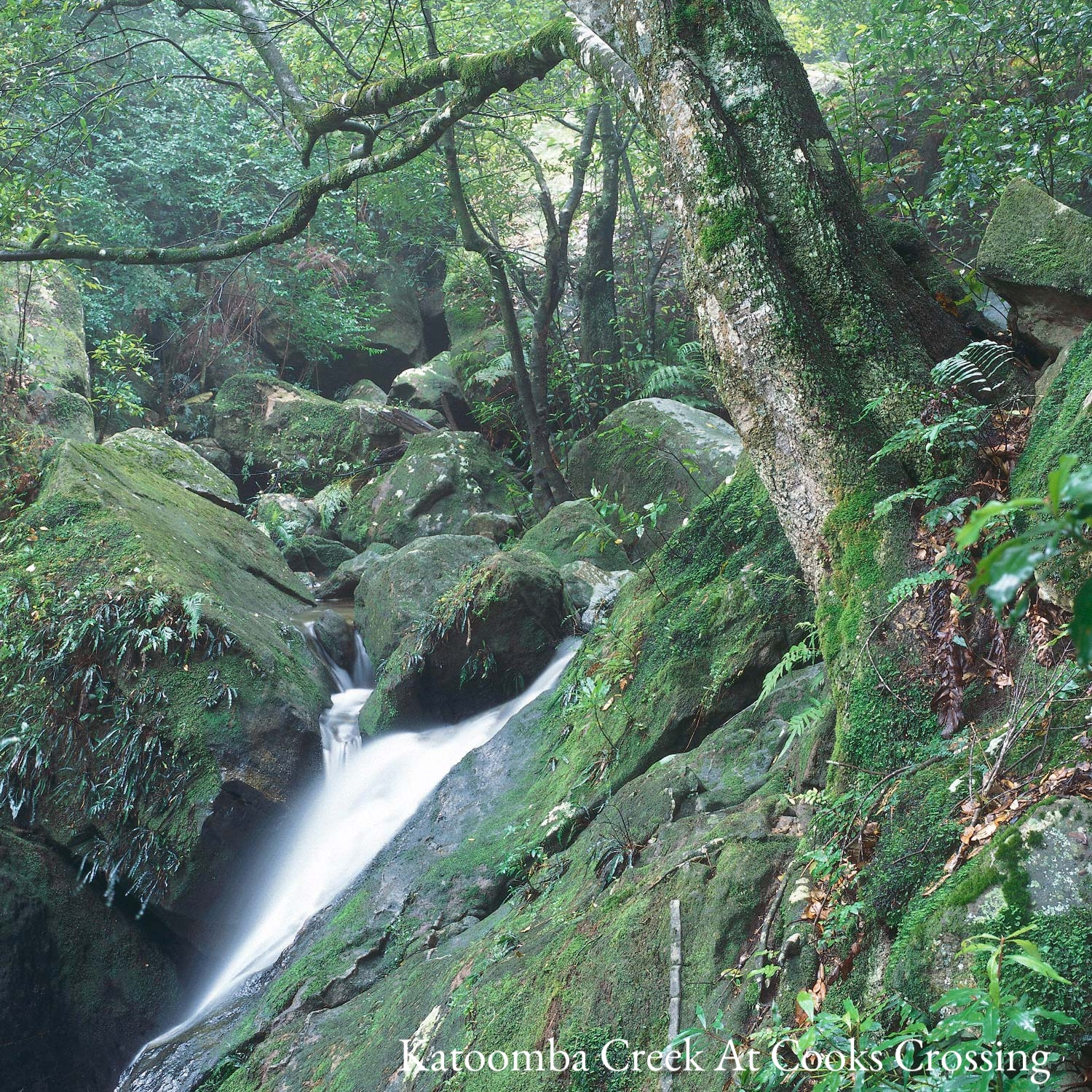 Warren-Hinder-Valley--Stream-Katoomba-Falls-.jpg