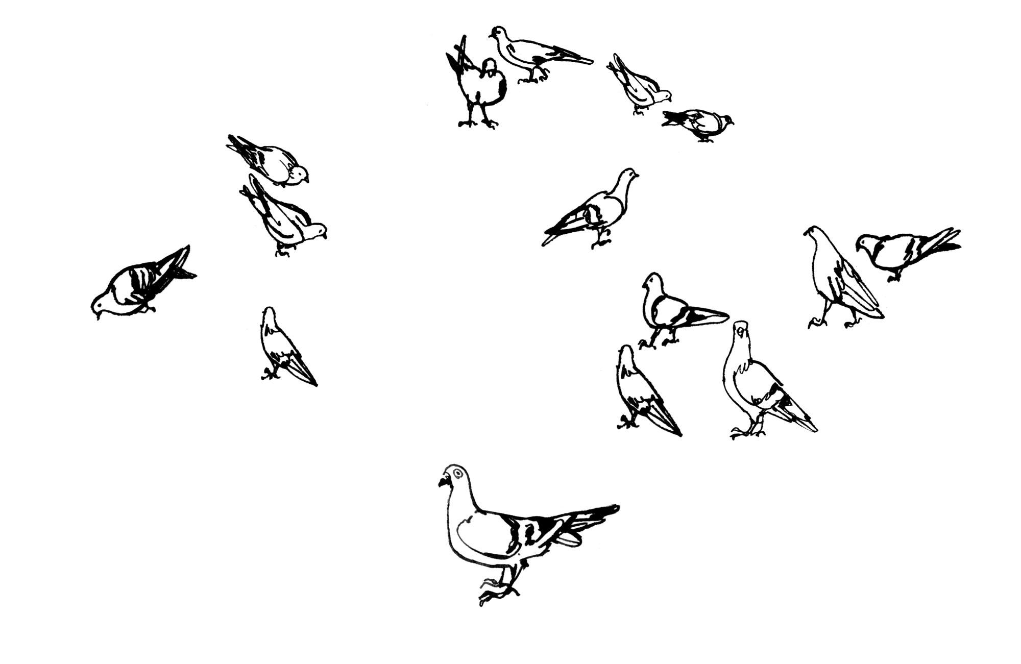 NY Pigeons