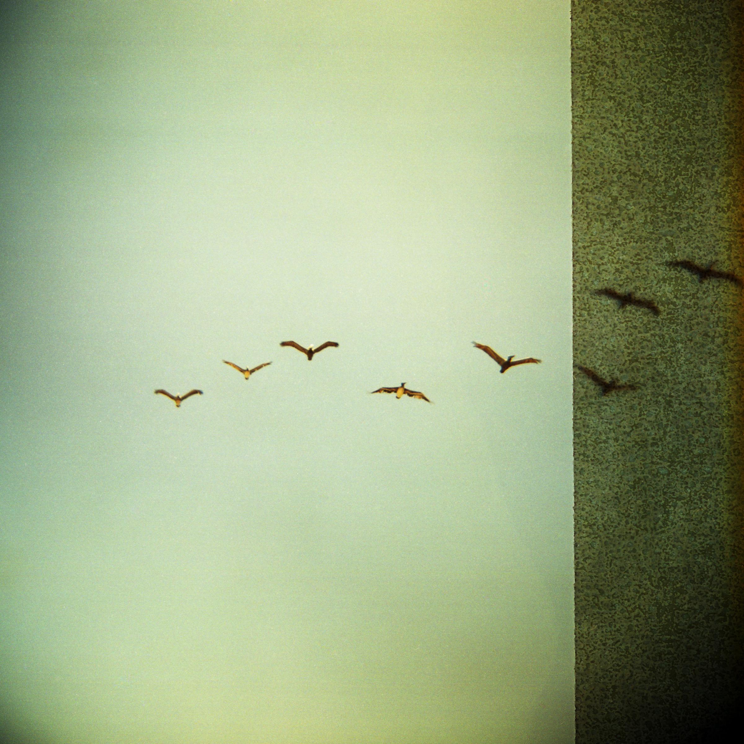 Birds of Paradise  • Capitan State Beach, CA